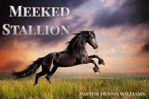 Meeked Stallion